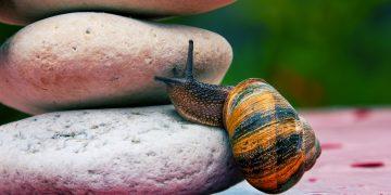 Perché non faccio (quasi) niente: la Legge del Minimo Stimolo