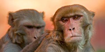 A scuola da un macaco!