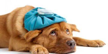 Tu che mal di testa hai?